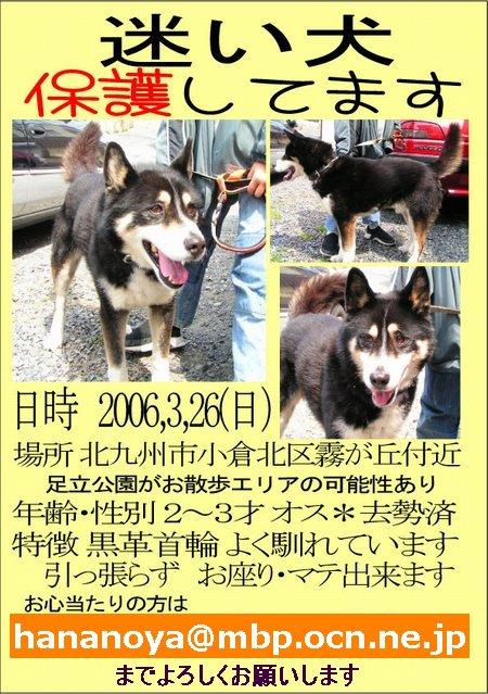 小倉北区で迷い犬保護しています!_b0059154_2010091.jpg