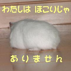 b0016983_9332083.jpg