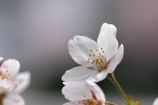 But Beautiful_b0067789_2273115.jpg