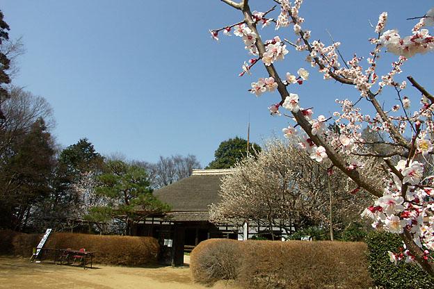 花盛り。桃の花ほか_b0010915_2328544.jpg
