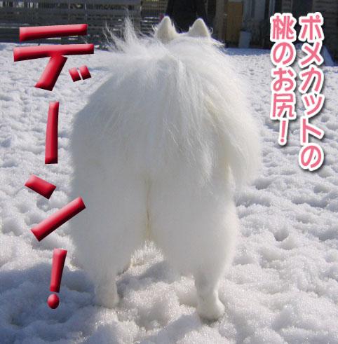 カッパと腹掛け_a0044521_2055145.jpg