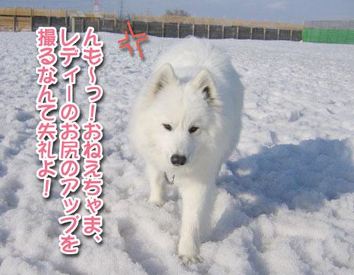 カッパと腹掛け_a0044521_20564264.jpg