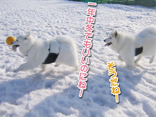 カッパと腹掛け_a0044521_21214036.jpg