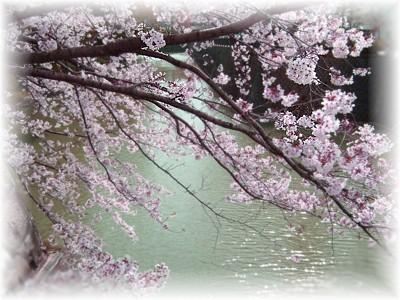 お花見しましょう♪_c0006826_7155474.jpg