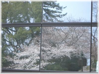 お花見しましょう♪_c0006826_7165738.jpg