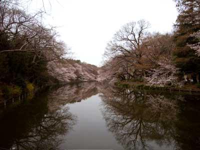 今朝の井の頭公園。_e0046128_16124248.jpg