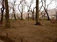 今朝の井の頭公園。_e0046128_1621397.jpg