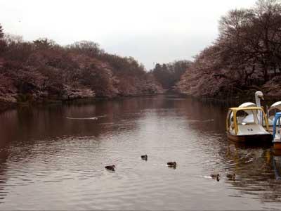 今朝の井の頭公園。_e0046128_16531154.jpg
