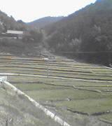段々畑 (谷)_f0099147_21285269.jpg