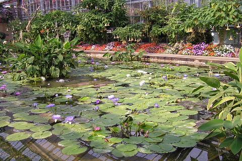 スイレンの池 (花鳥園)_a0030958_19393323.jpg