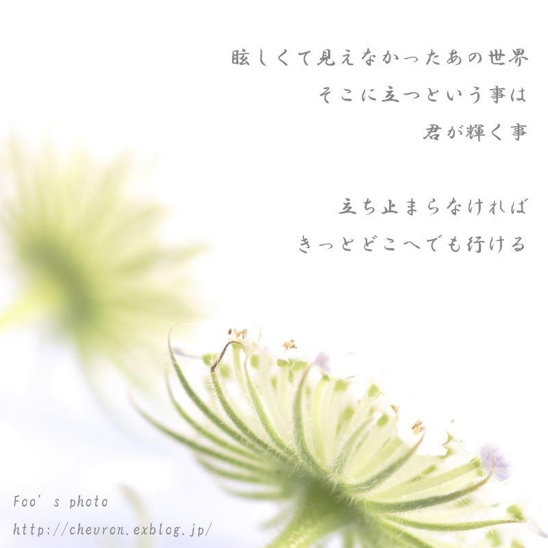 d0013363_2353295.jpg