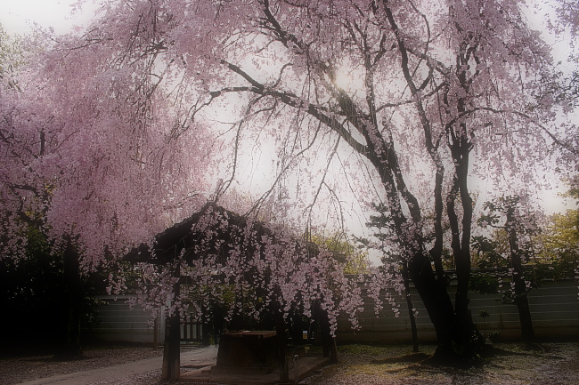 そうだ京都、行こう。 2_f0021869_0124519.jpg