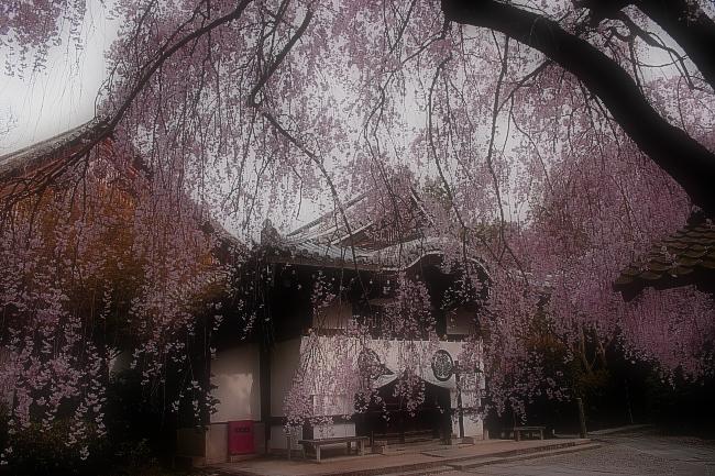 そうだ京都、行こう。 2_f0021869_014282.jpg