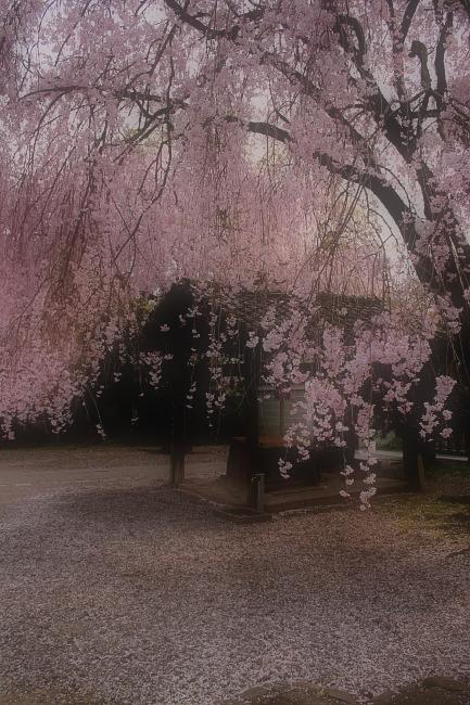 そうだ京都、行こう。 2_f0021869_015391.jpg