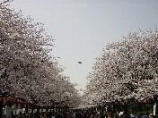 流石に上野の山です・・・・・_f0053218_21393388.jpg