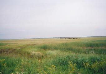 ユーラシア大陸横断 シベリア横断 (21)  マイリンスクからノボシビルスクへ _c0011649_0313760.jpg
