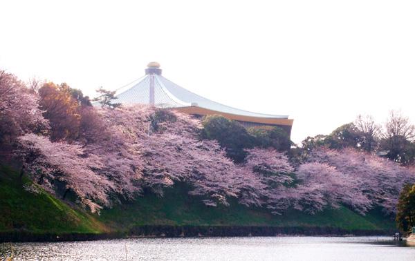 皇居の桜・牛ケ淵・千鳥ケ淵_a0003650_16482315.jpg
