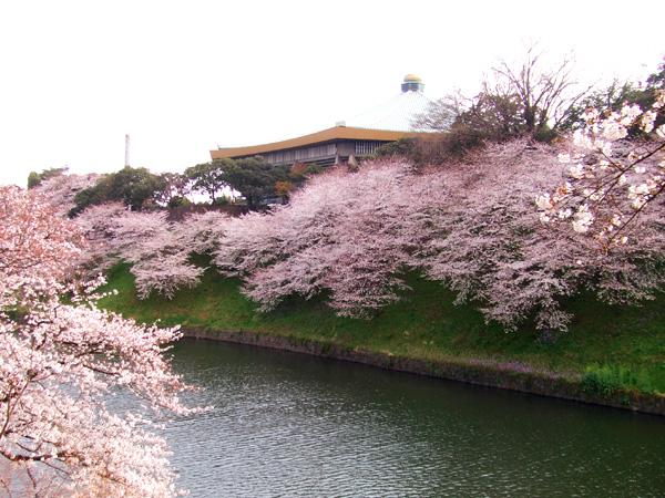 皇居の桜・牛ケ淵・千鳥ケ淵_a0003650_164952.jpg