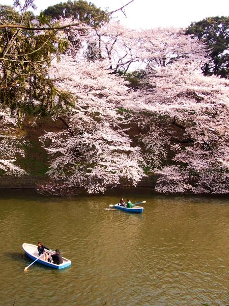 皇居の桜・牛ケ淵・千鳥ケ淵_a0003650_1655416.jpg