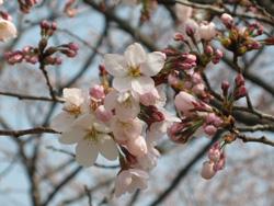 春じゃの〜_b0003474_10411194.jpg