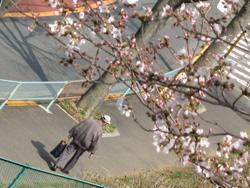 春じゃの〜_b0003474_10413886.jpg