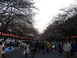 3/25の上野公園_a0003075_1972035.jpg