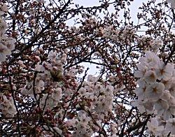 3/25の上野公園_a0003075_1973538.jpg
