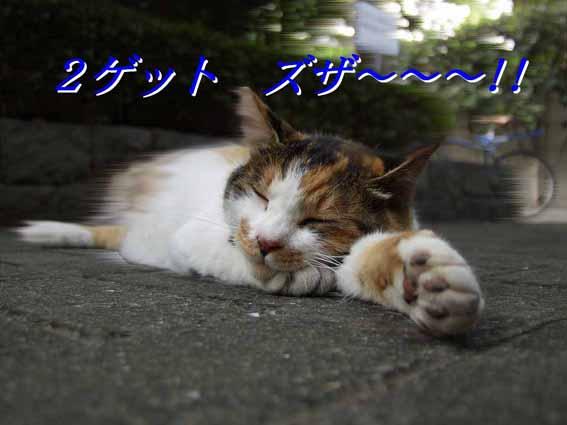 f0003289_11403298.jpg
