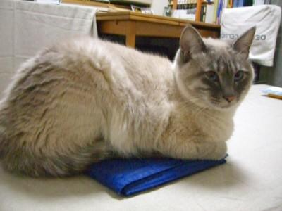 野良猫⇒地域猫  その1_c0006826_714552.jpg