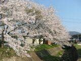 うららか桜まつり_f0076731_11162920.jpg