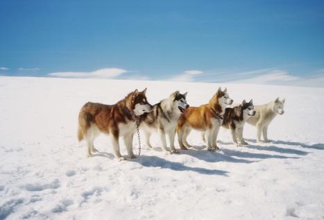 南極物語の画像 p1_13