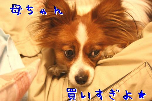 d0013149_2155485.jpg