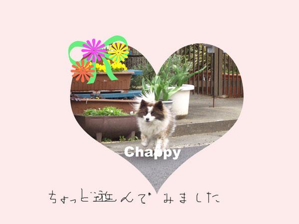 c0025167_20525462.jpg