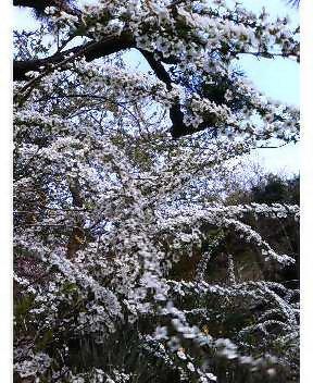3月30日(木) スーパー翁(おきな)大募集!_e0006772_2211554.jpg