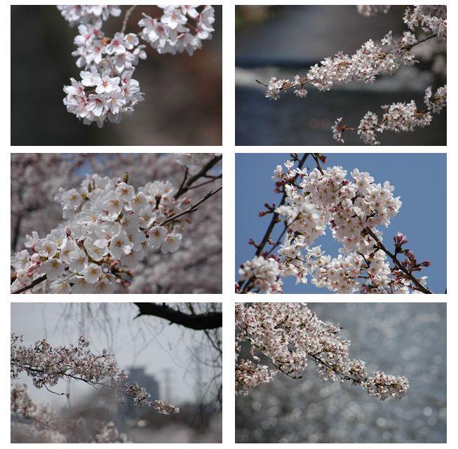 毎度桜で_c0051105_22485520.jpg