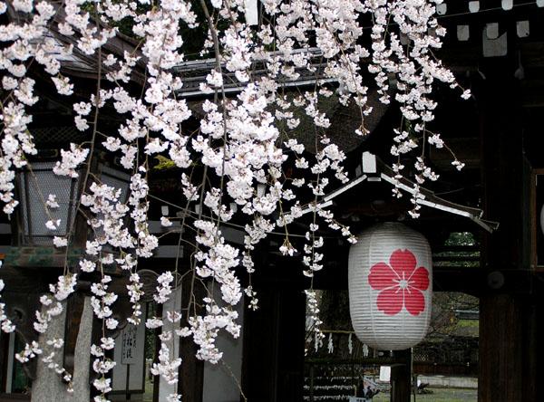 平野神社_e0048413_2372145.jpg