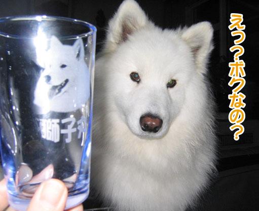ガラスの獅子丸_a0044521_2125429.jpg