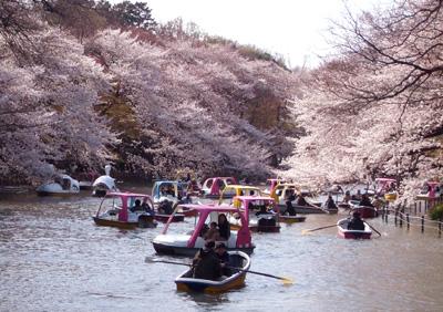 吉祥寺・井の頭公園の桜_a0003650_225242.jpg