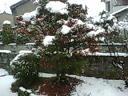 なごり雪にしては・・・_f0030155_912553.jpg