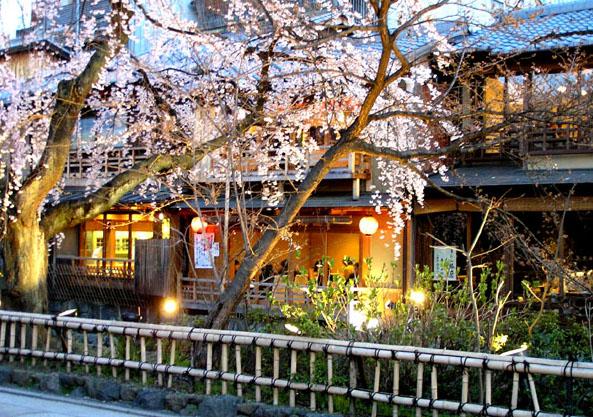 祇園白川のしだれ桜_e0048413_19173751.jpg