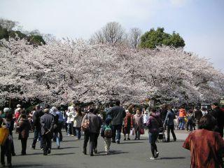 桜前線キャッチ_c0025115_0452286.jpg