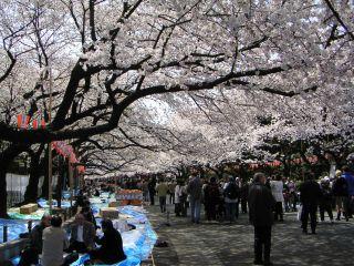 桜前線キャッチ_c0025115_0454154.jpg
