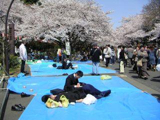 桜前線キャッチ_c0025115_0465844.jpg
