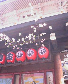 歌舞伎座の桜(つくりもの)_d0004728_10171982.jpg