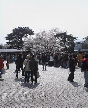 大混雑の桜_d0004728_13455387.jpg