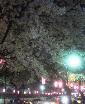 夜の桜_d0004728_18482397.jpg