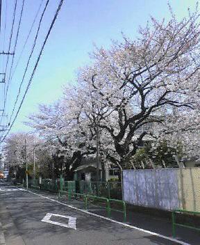 今日は道中の桜をUPします_d0004728_9222562.jpg