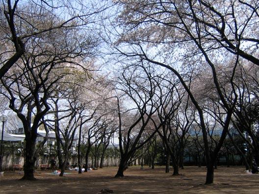 上野毛自然公園_f0091067_23465954.jpg