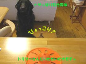 d0043478_053135.jpg