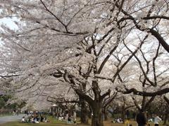 桜てんこもりのお散歩_e0065433_1956431.jpg